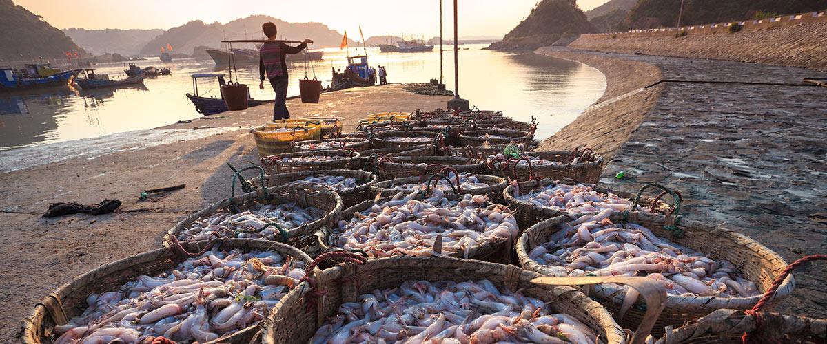 połów krewetek i owoców morza w Wietnamie shrimp and seafood sailing in Vietnam